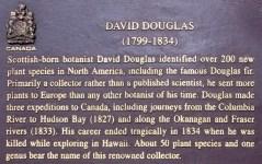 David Douglas sign-Cathedral Grove, MacMillan Park-Canada