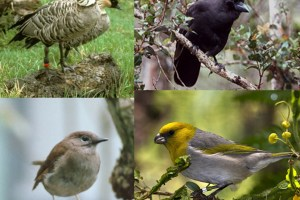 Endangered Birds and Their Recovery