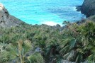 Endemic Nihoa fan palm (Pritchardia remota) in its original habitat on Nihoa Island (Peter T. Oboyski)
