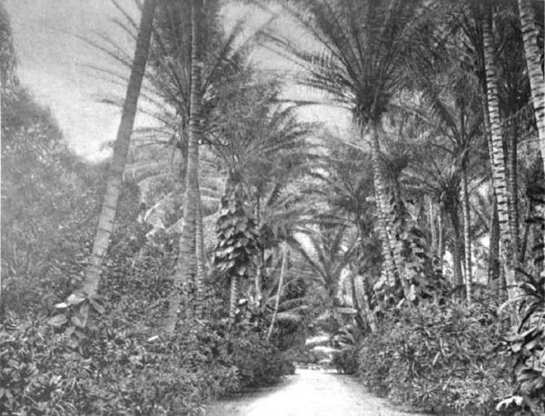 Entrance_to_Ainahau,_near_Honolulu,_residence_of_Princess_Kaiulani-1901-600