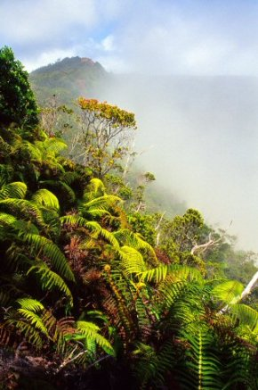 Native landscape, Kalalau Valley, Na Pali coast, Kauai