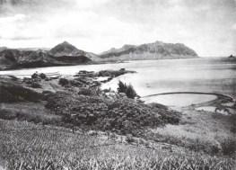 Fishpond Kailua side of Libbyville-1924