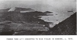 Former Taro Loi Converted to Rice Fields