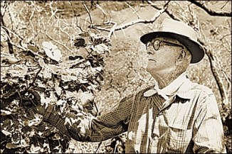 George Munro examines a hibiscus at the nine-acre Na Laau Hawaii Arboretum on Diamond Head, which he established-HnlAdv