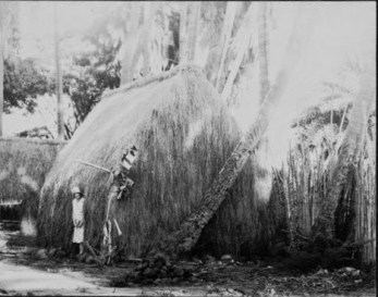 Grass house at Lalani Village, Waikiki-PP-32-4-001