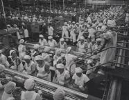 Hawaiian Pineapple Company Canning Lines, Honolulu, O'ahu, 1958