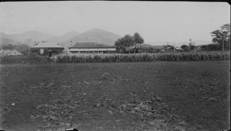 Hawaiian Sugar Planters Association Experiment Station-PP-8-9-002-00001