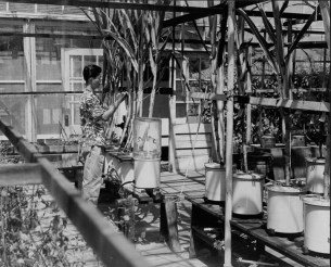 Hawaiian Sugar Planters Association Experiment Station-PP-8-9-006-00001