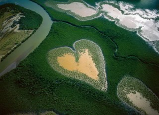 Heart of mangrove trees in New Caledonia