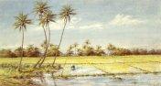 Helen_Whitney_Kelley_-_'Rice_Paddies',_watercolor,_1890