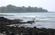 Holualoa_Bay-Across_to_Keolonahihi