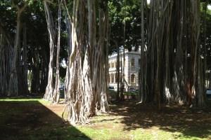 ʻIolani Palace Trees