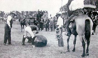 Ikua Purdy in Steer Roping Contest, Frontier Day, 1908