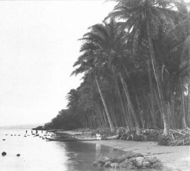 Kapuaiwa_Grove,_Kalamaula-Kaunakakai,_Molokai