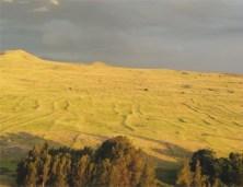 Kohala Field System_photo
