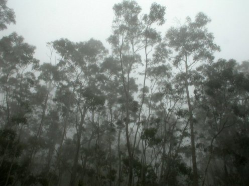 Kokua Aku, Kokua Mai-koa trees - canoes-HWAP