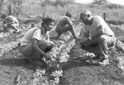 Lahainaluna-Kahu Earl Kukahiko (right), teaches students about farming -1980s-(mauinews)