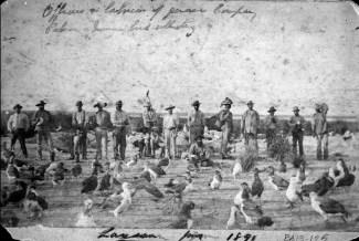 Laysan-Island-Munro-June_1891-(DenverMuseum)