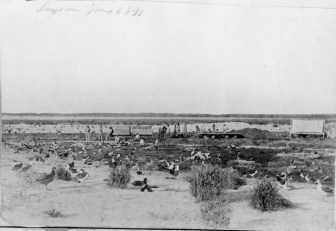 Laysan_Island_Munro_June-1891-(DenverMuseum)