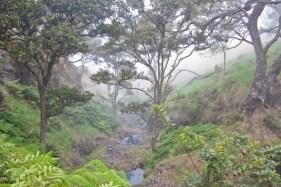 Leeward_Haleakala_Kahikinui_Forest-DLNR