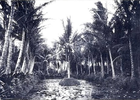 Liliy_pond_and_coconut_groves_at_Ainahau
