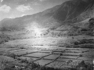 Loi-Kalo-Punaluu-(KSBE-BishopMuseum)-1924