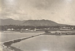 Looking_mauka_from_Iwilei_Prison-overlooking_causeway