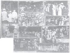 Malihini Tree -Hawaiian Gazette-Dec_29,_1913
