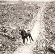 Mamalahoa_Trail_as_horse_trail-1900s-(HMCS-NPS)