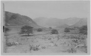 Manoa-Lantana and Kiawe-PP-59-6-006