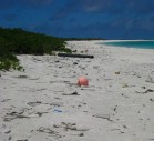 Marine debris on the beach of Green Island, Kure Atoll, Northwestern Hawaiian Islands-(WC)