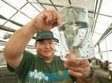 Moi Stock Enhancement-Anuenue Fisheries-starbulletin