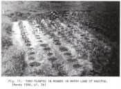 Mound-planted Taro-Devaney