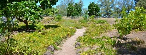 Na_Pali_Coast_Ohana-Native Hawaiian plant restoration nursery-(Wichman)
