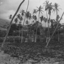 Napoopoo Pond-Lualiiloa Pond-HMCS-1906