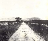 Old_Waianae_Road-(Cultural_Surveys)