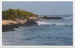 PASH-Kohanaiki Beach Park (Live in Hawaiʻi)