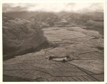 Pearl Ridge Hill-Sugar cane fields at Aiea, Oahu, T.H. Altitude 800'-Aug 4, 1933-Babcock
