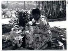 Plumeria 4-Babcock