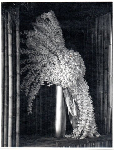 Plumeria 5-Babcock