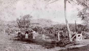 Punahou-Gardens-1880
