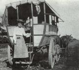 Punahou Omnibus-1890