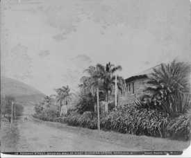 Punahou Street looking toward Round Top-(HSA)-PPWD-17-3-027-1900
