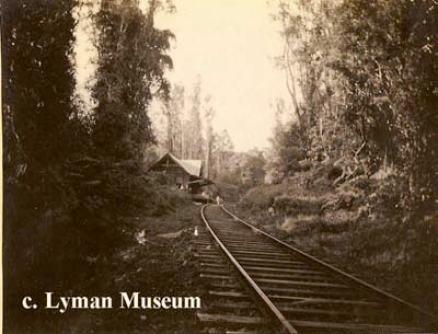 Railroad through Puna Forest-Lyman Museum-Uyeoka