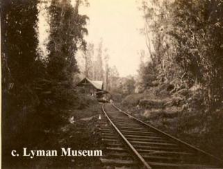 Railroad through Puna Forest-Lyman Museum-Uyeoka