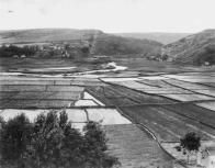 Rice cultivation and former loi kalo (looking mauka) in Anahola-KauaiMuseum-1890-1898
