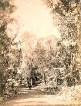 Road (new) to volcano-(HHS-6032)