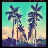 Royal Palm Drive - Wahiawa
