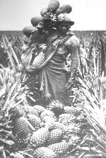 Sakada-pineapple