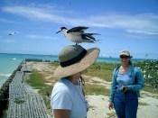 Tern_Island